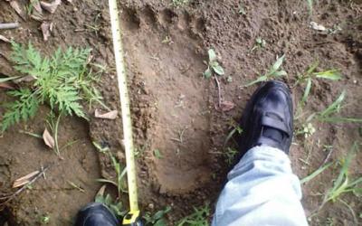 Squatch (Sasquatch or Bigfoot)